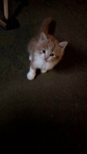 Beautiful kittens for sale $20.00