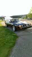 1980 Pontiac Firebird 4.9 turbo. RARE BEAUTY