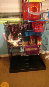 Fancy rat with large cage and acc's