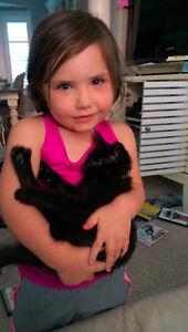 Missing  - Black Shorthair Kitten - Central Frederick Kitchener / Waterloo Kitchener Area image 1