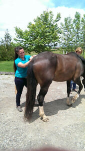 Stable Hands Equine Massage Therapy Kitchener / Waterloo Kitchener Area image 6