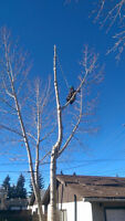 Don't overpay for tree services..