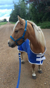 Driving pony- safe, sound and stunning!