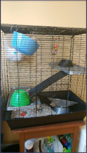 3 Story Rat Cage + Accessories