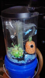 3  GALON  ACRYLIC WATER COLOR CHANGING FISH TANK