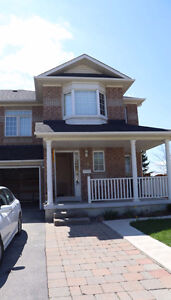 Basement for Rent in Brampton (Great Lake and Bovaird-Trinity)