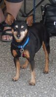 **Adorable Keifer - MIN PIN cross is available for adoption****