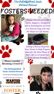 FOSTERS WANTED! - For Wonderful Rescue Dogs