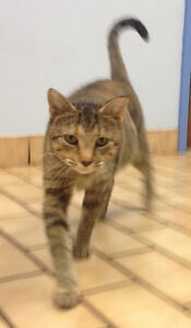 Rescued cat looking for someone with a really big heart! Kitchener / Waterloo Kitchener Area image 3