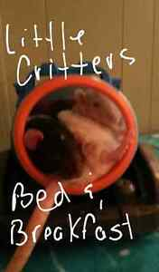 LITTLE CRITTERS BED AND BREAKFAST