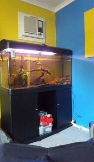 EOI- Great fish tank Ipswich Ipswich City Preview