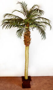 6 Foot High Palm Tree Artificial  Plant - $125 Ea. or 2 for $230