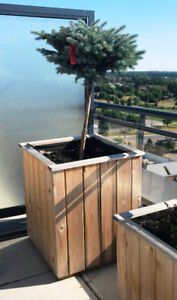 OUTDOOR CEDAR PLANT BOXES