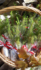 Plant for Canada's 150th!  Red Maples, Oaks, Blue Spruce, more