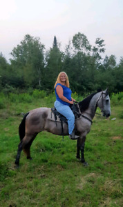 Trail Horses For Sale - Excellent minded, Gorgeous and Sweet