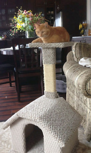 Loving 8 month old male orange tabby cat