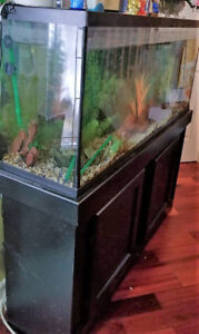1 year old 55 Galon Fish tank n stand-filter n accessories