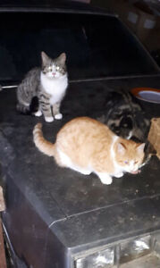 Free cats. Looking for homes.