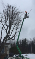 Dynamic Tree Service trimming and removal