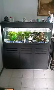 4ft fish tank aquarium Riverwood Canterbury Area Preview
