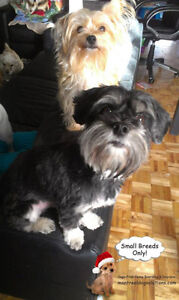 *FULL HOLIDAYS* CERTIFIED DOG TRAINER SITTING FOR SMALL DOGS West Island Greater Montréal image 8