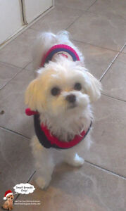*FULL HOLIDAYS* CERTIFIED DOG TRAINER SITTING FOR SMALL DOGS West Island Greater Montréal image 5