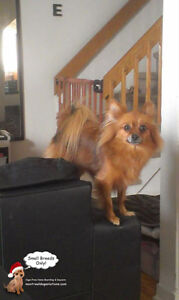 Home boarding/daycare small dogs since 2010 by certified trainer West Island Greater Montréal image 6