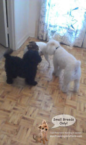 *FULL XMAS/NYE* CAGELESS SITTING SMALL DOGS IN HOME OF TRAINER West Island Greater Montréal image 8