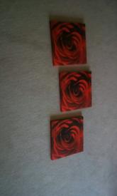 Three rose pictures