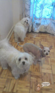 *FULL FOR HOLIDAYS* DOG CARE FOR LITTLE ONE'S IN CAGE-FREE HOME West Island Greater Montréal image 1