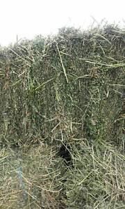 Lucerne hay Denman Muswellbrook Area Preview