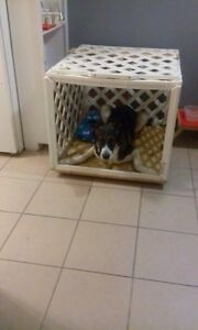 Dog crate London Ontario image 4