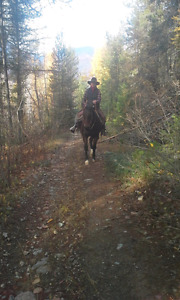 Horse training; from leading to loping.. Book your fall spots!