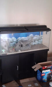 Fish tank and everything seen in pics