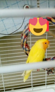 Lovebird, cage, stand, $100.00