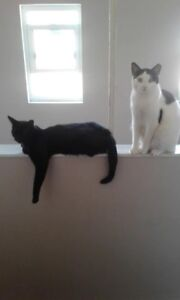 2 beautiful cats looking for a new home ASAP