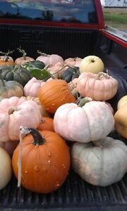 Decortive Pumpkins