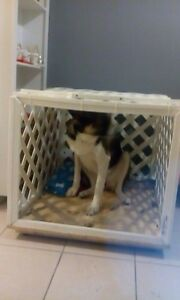 Dog crate London Ontario image 3