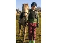 12.2hh Family Pony for sale