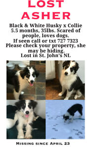 MISSING! ASHER