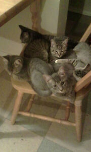 Kittens to give away to good home