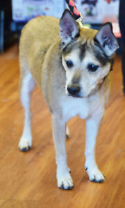 **Sweet Rascal - MIX breed is available for adoption***