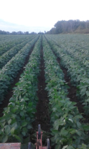 lease land for growing organic crops