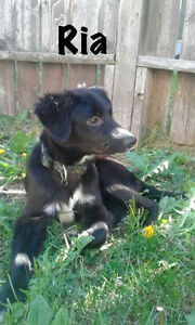 Fun loving Ria - 5 mnth old border collie/terrier mix rescue