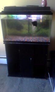 50 gallon fish tank + Oscar fish + Stand