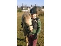 12hh Lead rein - Family Pony for sale