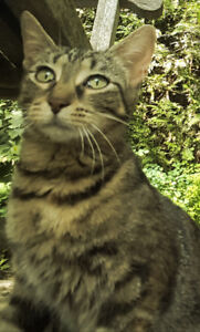 Found Cat and 2 Kittens London On Canada