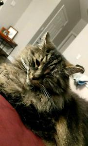 Lost Cat kemptville