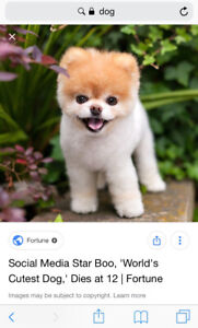 A dog for sale
