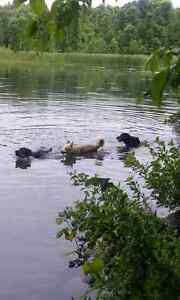 I Let The Dogs Out, pet sitting service Cornwall Ontario image 10